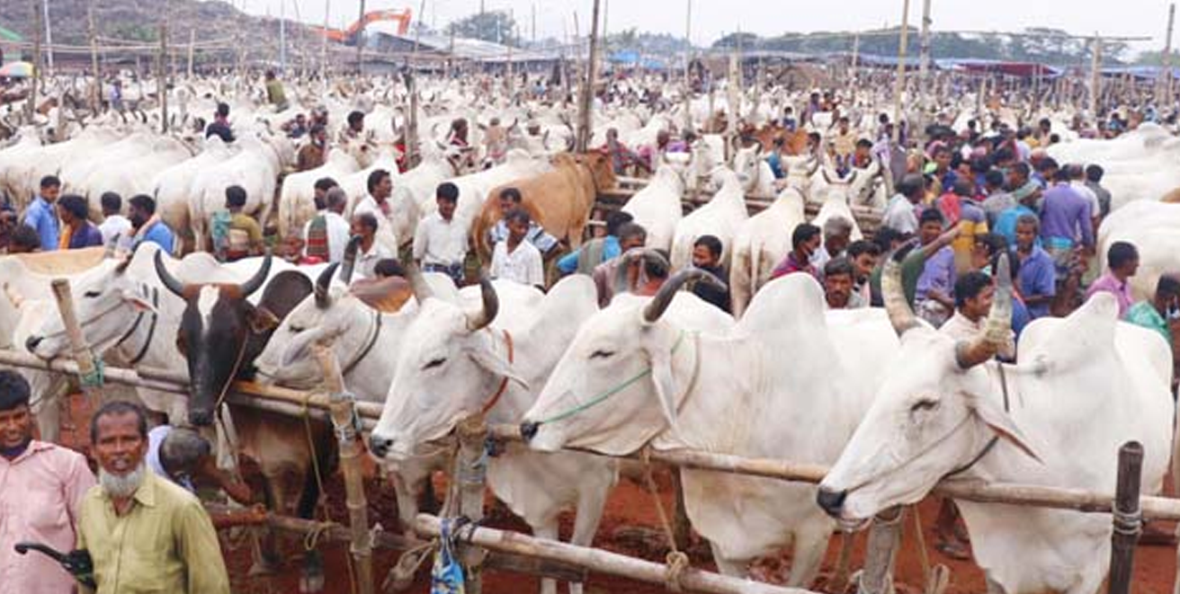 Bangladesh won't import cows from India this Eid-ul-Adha